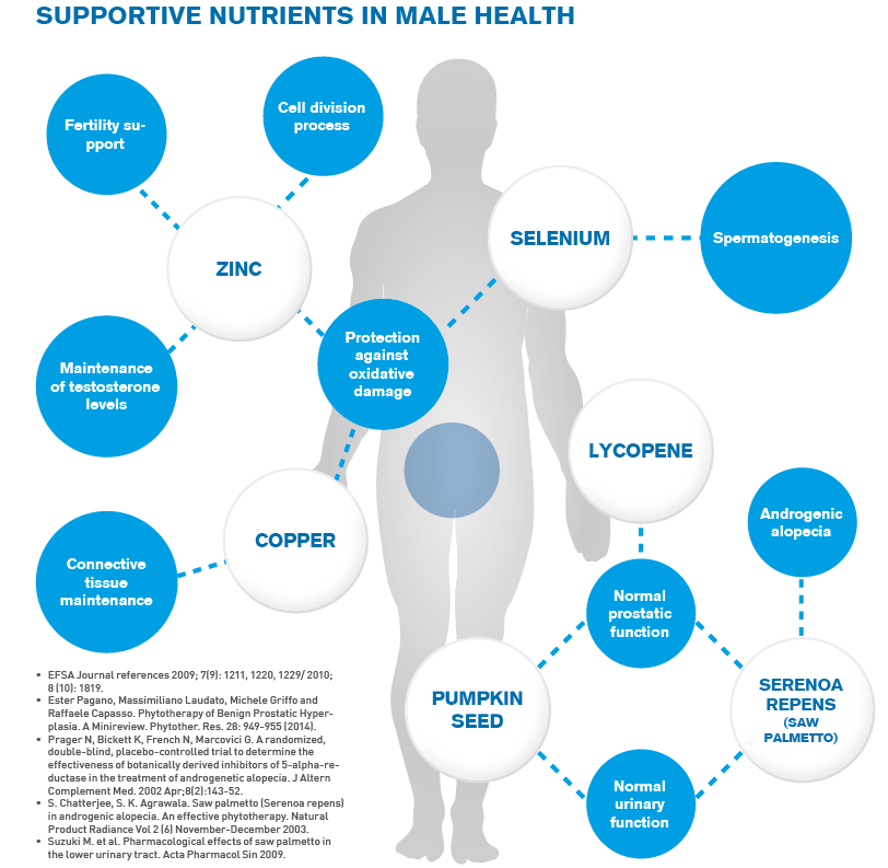 Supportive Nutrients in Male Health